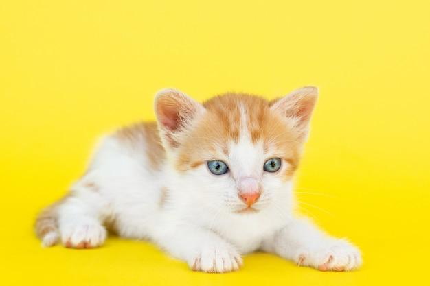 Petit chaton rouge Photo Premium