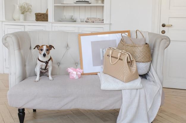 Petit chien sur le canapé avec une valise rétro Photo Premium
