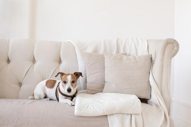 Petit chien sur le canapé Photo Premium