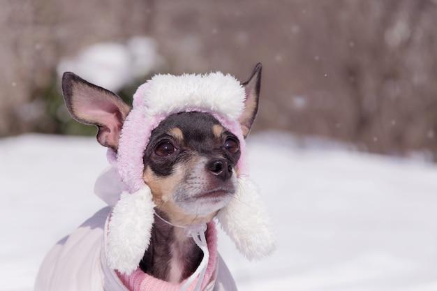 Un Petit Chien élève Ce Terrier Dans Un Bonnet D'hiver Photo Premium