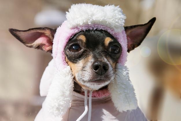 Un Petit Chien Triste Au Chapeau Photo Premium