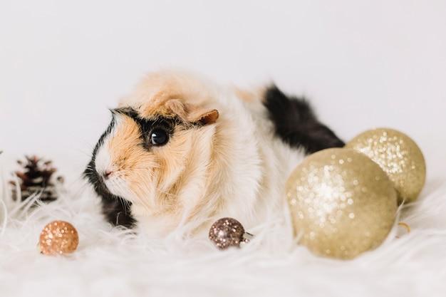 Petit cochon d'inde avec des boules brillantes Photo gratuit