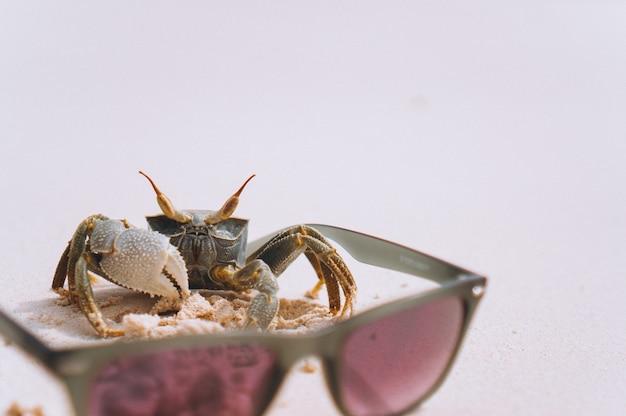 Petit crabe mignon à la plage de l'océan Photo gratuit