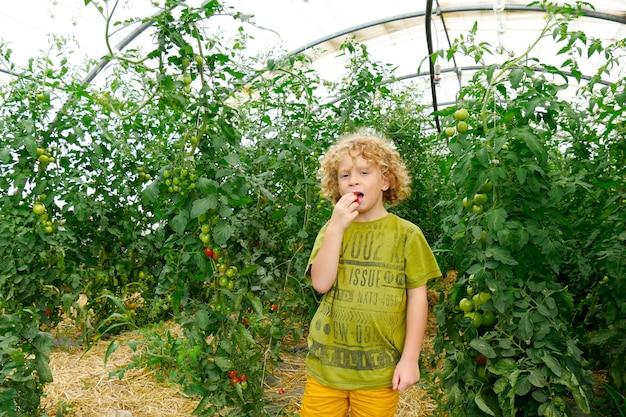 Petit Garçon Blond Cueillant Des Tomates Dans Le Jardin Photo Premium