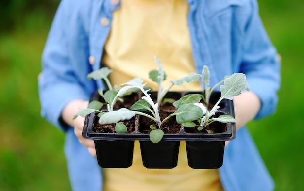 Petit garçon, tenue, semis, dans, pots, jardin domestique Photo Premium