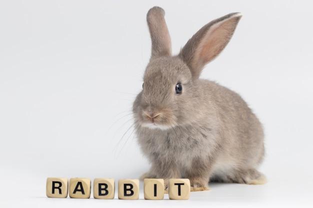 Petit lapin assis avec la texture de la boîte en bois sur fond blanc isolé au studio. Photo Premium
