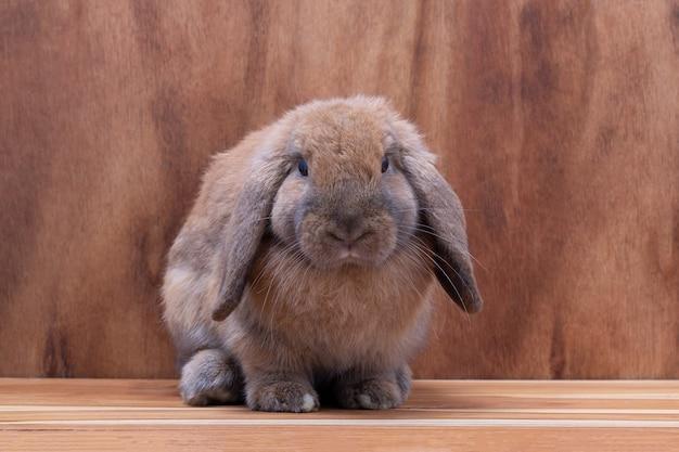Petit lapin brun sur fond en bois marron au studio Photo Premium