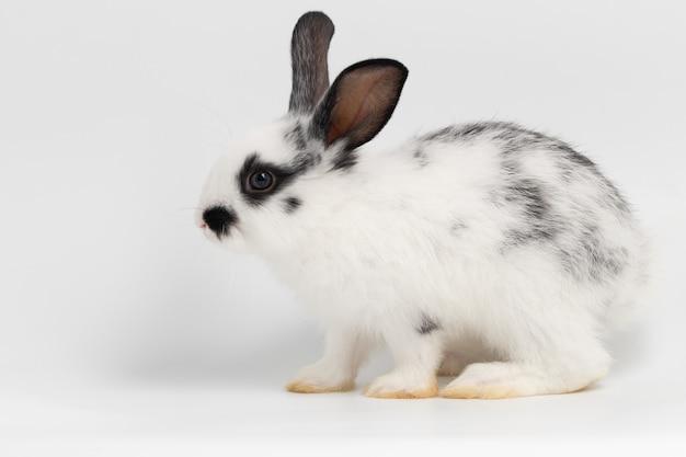Petit lapin à côté de assis sur fond blanc isolé au studio. Photo Premium