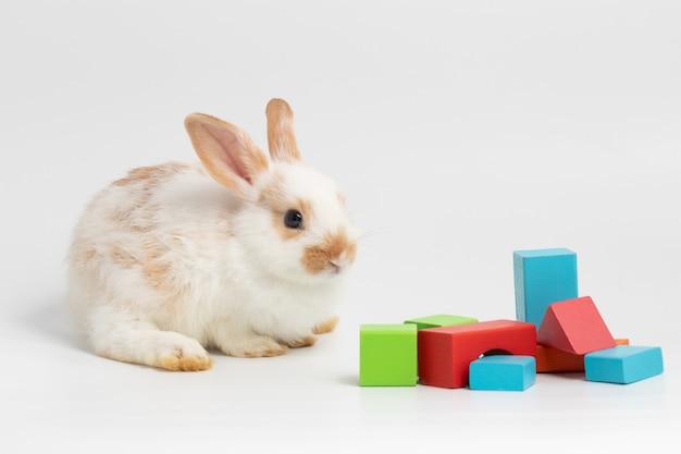 Petit lapin de couple assis avec des formes de couleurs géométriques sur fond blanc isolé au studio. Photo Premium