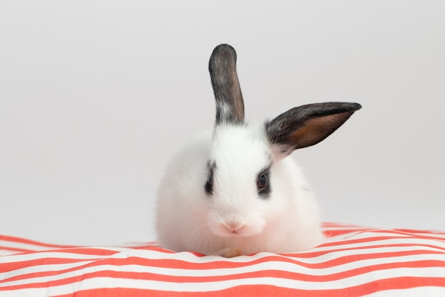 Petit lapin timide assis sur un coussin rouge avec un fond blanc isolé au studio. Photo Premium