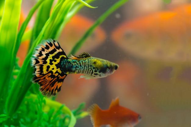 Petit poisson en aquarium ou aquarium Photo Premium