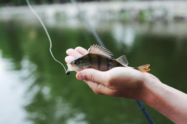 Petit poisson frais pêché à la main contre le lac Photo gratuit