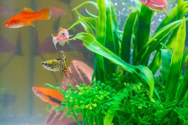 Petit poisson rouge avec une plante verte dans un aquarium ou un aquarium Photo Premium