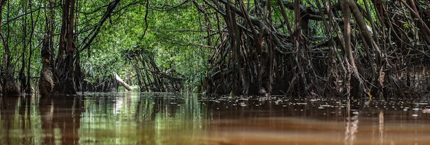 La petite amazone en pang-nga dans le canal de sang nae en thaïlande Photo Premium