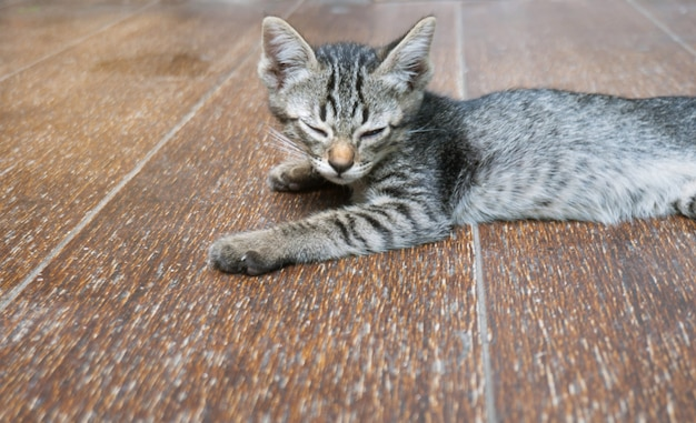 Gratuit petite chatte