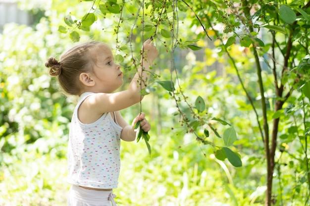 Petite fille caucasienne, deux ans, cueillette de cerises immatures dans un verger Photo Premium