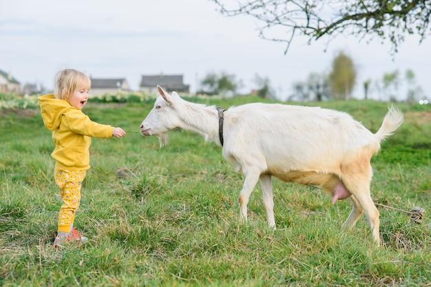 Petite Fille Heureuse Dans Des Vêtements Jaunes Se Nourrissant D'herbe Une Chèvre Au Pré. Photo Premium