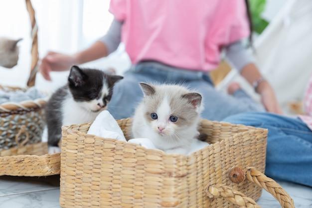 Petite fille jouant avec le chat dans le panier en bois à la maison, notion de l'amitié. Photo Premium