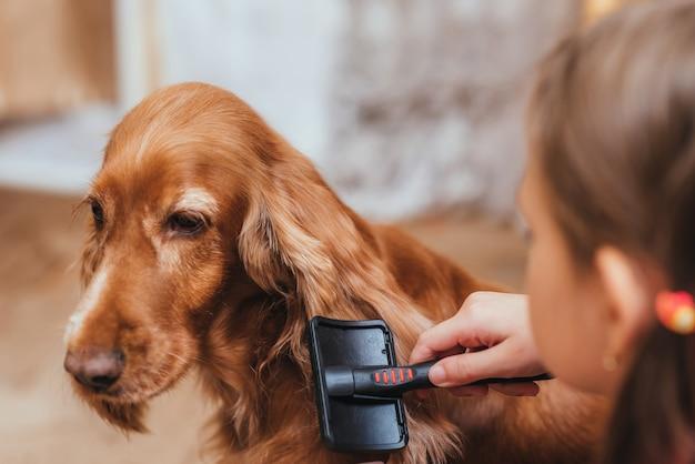 Une petite fille pour prendre soin du chien et se peigner Photo Premium