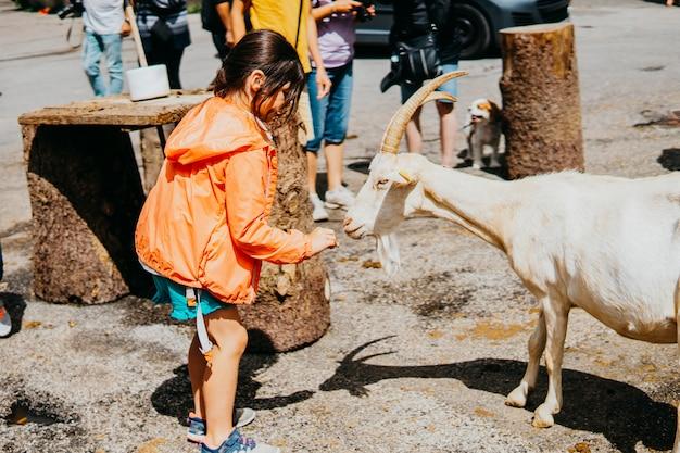 Petite fille se nourrit et joue avec la chèvre de montagne Photo Premium
