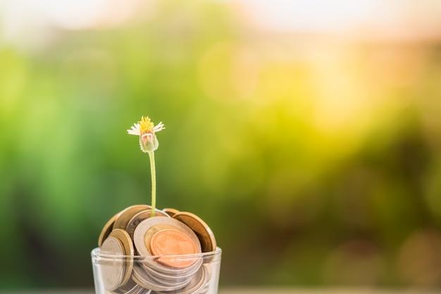 Une petite fleur qui pousse dans un verre rempli de pièces de monnaie Photo Premium