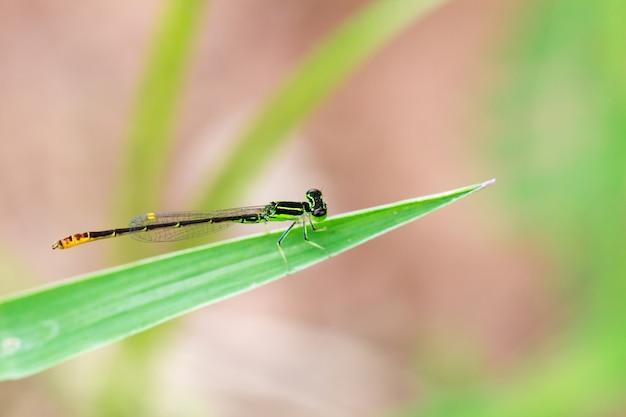 Petite libellule verte avec un arrière-plan flou Photo Premium