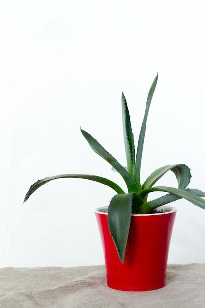 Une petite plante d'agave dans un pot rouge se dresse sur un tissu naturel sur une console blanche en face du mur blanc Photo Premium