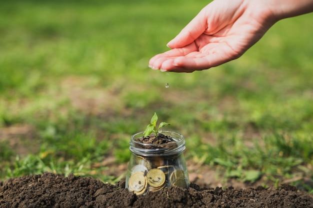 Petite plante avec des pièces de monnaie Photo gratuit