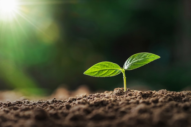 Petite plante poussant dans la lumière du matin au jardin. concept jour de la terre Photo Premium