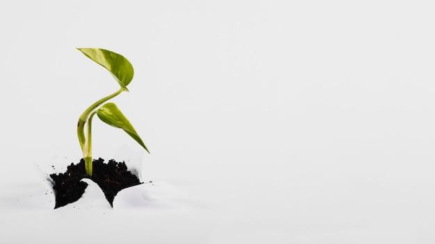 Petite pousse poussant à travers le papier Photo gratuit