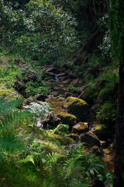 Petite rivière qui coule dans une gorge, caldeira velha, île de sao miguel, açores, portugal Photo Premium