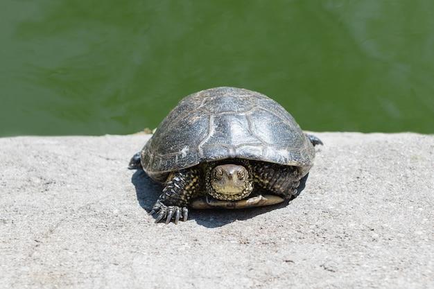 Petite Tortue Se Trouve Dans Le Zoo, Gros Plan. Photo Premium