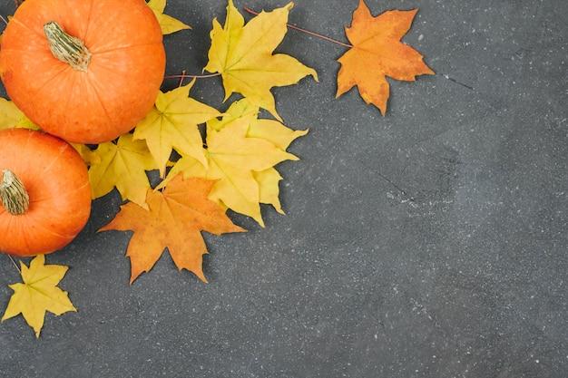 Petites citrouilles et feuilles d'érable jaunes sur un fond texturé gris foncé Photo Premium