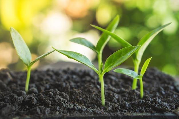 Petites plantes poussant sur le sol Photo Premium