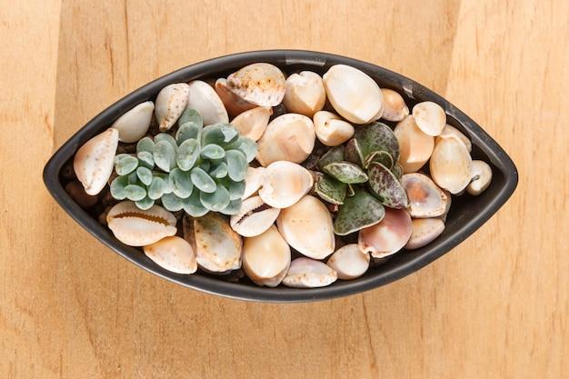 Petites plantes succulentes dans un pot en céramique Photo Premium
