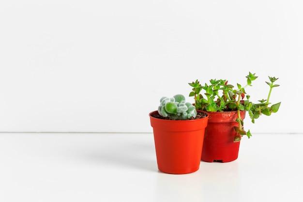 Petites plantes succulentes en pots à l'intérieur de la maison Photo Premium