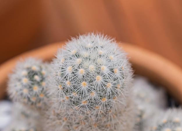 Petits cactus et plantes du désert Photo Premium