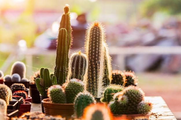 Petits cactus et plantes succulentes au magasin de fleurs Photo Premium