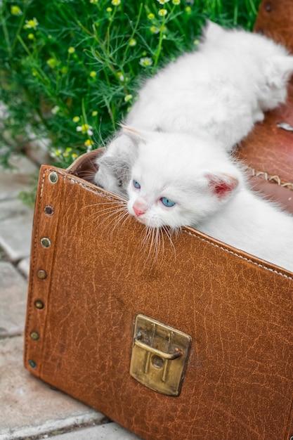 Petits chatons jouant dans une vieille valise Photo Premium
