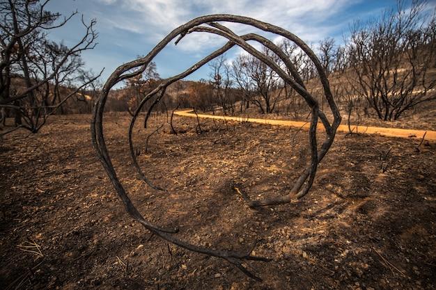 Photo De Branches Circulaires Entourées D'arbres Sous La Lumière Du Soleil Et Un Ciel Bleu Photo gratuit