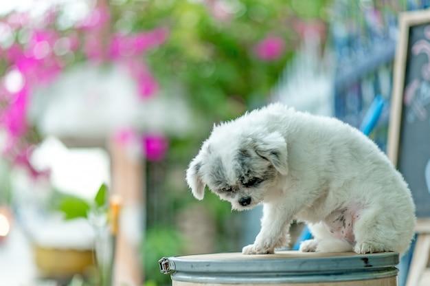 Photo de chien blanc, séance photo mignonne, concept de chien d'amour Photo Premium