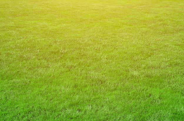 Photo du site avec une herbe verte au ras du sol. pelouse ou allée d'herbe verte fraîche Photo Premium