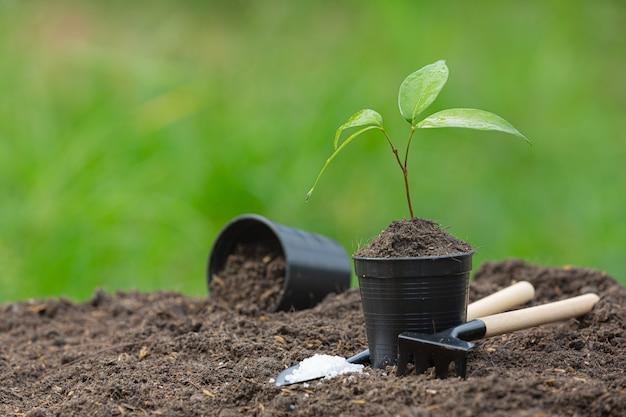 La Photo En Gros Plan Du Jeune Arbre De La Plante Se Développe Photo gratuit