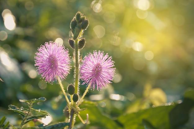 Photo gros plan d'une fleur sauvage de chardon dans le champ Photo Premium
