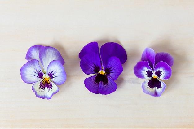 La Photo En Gros Plan De Fleurs Violettes, Violettes Colorées Sur Une Table En Bois Clair. Mise à Plat, Vue De Dessus Photo Premium