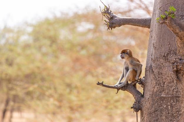 Photo D'un Langur Brun Assis Sur Une Branche D'arbre Au Sénégal Photo gratuit
