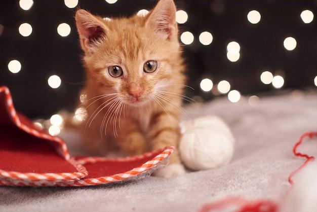 Photo de noël avec un mignon chat gingembre de lumières colorées sur le fond Photo Premium