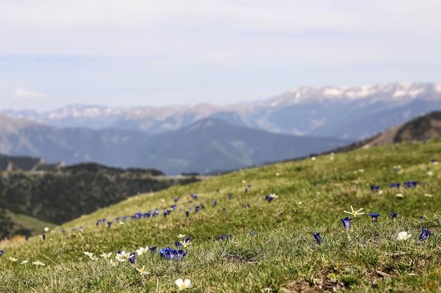 Photo De Paysage De Montagne Des Pyrénées Enneigées Dans La Station De Ski D'el Tarter, Andorre. Fleurs De Printemps Photo Premium