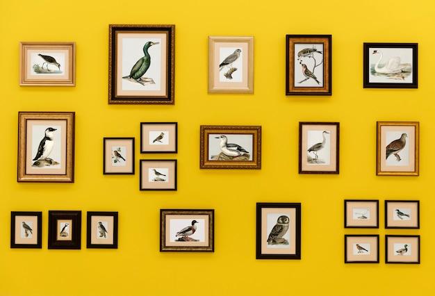 Photos d'oiseaux dans des cadres suspendus au mur jaune Photo Premium