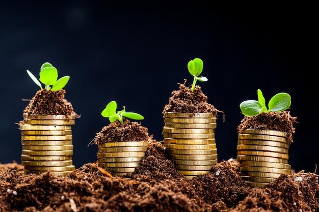 Pièces D'or Dans Le Sol Avec Une Jeune Plante. Concept De Croissance De L'argent. Photo Premium